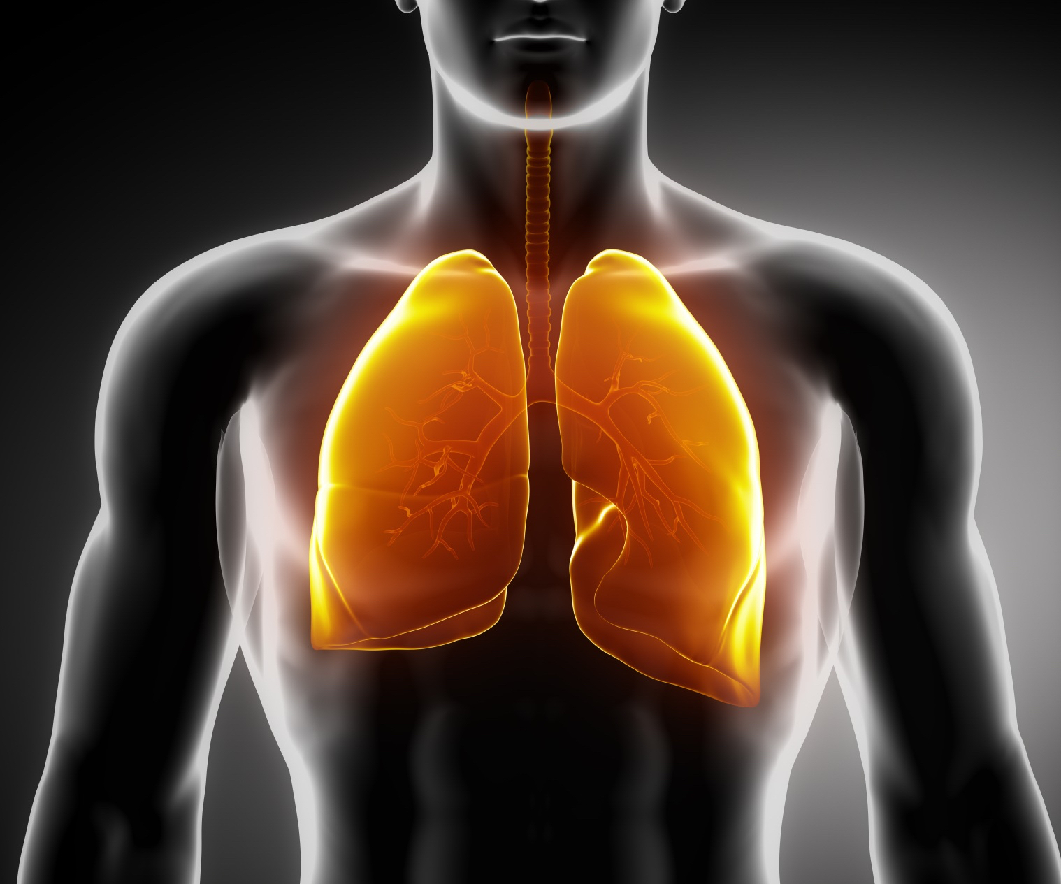 Representative picture of lungs