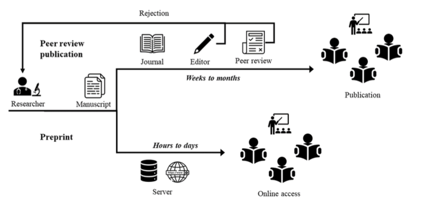 Diagram of preprint versus traditional peer review publication. Starts with Researcher  writing a manuscript. Traditional publication approach takes weeks to months to then go through peer review, editorial amendments via a journal. Preprint takes hours to days to go via the internet and allow readers online access instead of publication in a journal.